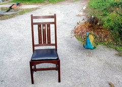 Just for fun....Single inlay chair shown with a 2 year old Peacock in display mode.  In the background is an action photo of a Peacock coming in for a landing after leaping off the roof of the house.